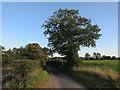 TG1028 : Blackwater Lane by Hugh Venables