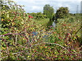 TQ6974 : Drainage ditch and berries on Shorne Marshes by Marathon