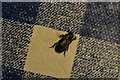 TF3593 : Tiny beetle found in house in Yarburgh by Chris