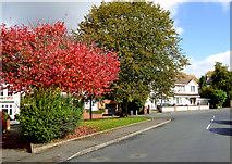 SO9096 : Autumn in Birchwood Road, Penn, Wolverhampton by Roger  Kidd
