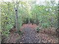 SE2804 : Trans Pennine Trail near Silkstone Common by Jonathan Thacker