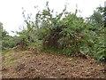 SX4366 : Former orchard near Lockridge by David Smith