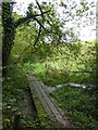 SX4266 : Boardwalk over tributary of the Tamar by David Smith
