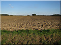 TG0726 : Field off Church Lane by Hugh Venables