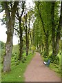 NS5320 : Path through an avenue of trees by Philip Halling