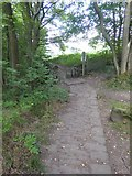 SK2477 : Stone paving of a path in Horse Hay Coppice by David Smith