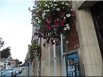 SO6024 : Hanging baskets on Gloucester Road, Ross-on-Wye by David Howard