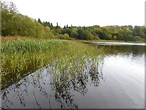 N6699 : Northern end of Castle Lough by Oliver Dixon
