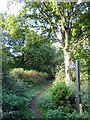 TQ4626 : Footpath near Fairwarp by PAUL FARMER