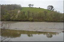 SX2555 : River East Looe by N Chadwick