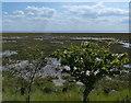 TA3418 : Welwick Saltmarsh Nature Reserve by Mat Fascione