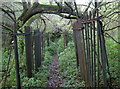 ST6469 : A crumbling fence, a natural archway by Neil Owen