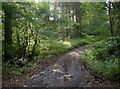 ST6562 : Crossing the stream in Common Wood by Neil Owen