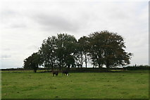 TF3999 : Bank in field on site of Swine Haven by Chris