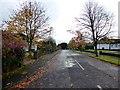 H4772 : Fallen leaves, Georgian Villas, Campsie, Omagh by Kenneth  Allen