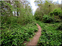 SO6303 : Woodland path, Lydney by Jaggery
