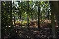 SU9386 : Woodland near the Blackwood Arms by Robert Eva