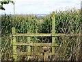 SK1728 : Footpath through the corn on Hanbury Hill by Ian Calderwood