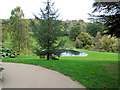 TQ4551 : Tree by pond at Chartwell by Paul Gillett