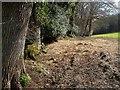SX7873 : Dartmoor Way by Goodstone Woods by Derek Harper