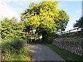SO3416 : Dominant tree, Llanddewi Skirrid by Jaggery