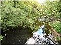 SJ9687 : River Goyt by Gerald England