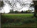 TF3138 : View from Skeldyke Road by Alex McGregor