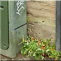 NT2675 : Bench mark, 28 Balfour Street, Pilrig by Alan Murray-Rust