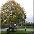 SJ5975 : Triangle and tree, Acton Bridge by Richard Webb