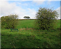 SK4840 : Trowell: fields by the former canal by John Sutton
