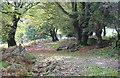 SO1605 : Track above Nant Maes-yr-onn, Cruglwyn by M J Roscoe