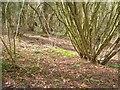 ST2722 : Henlade Wood by Derek Harper