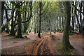 ST1536 : Sedgemoor : The Drove Road : Week 42