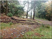 J3629 : Caterpillar tracks in Donard Wood by Eric Jones
