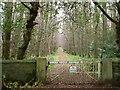 SX7858 : Woodland ride, Dundridge by Derek Harper