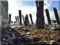 TA1128 : Humber Estuary : Week 42