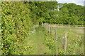 SP9949 : John Bunyan Trail by The Thorns by N Chadwick