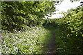 SP9949 : John Bunyan Trail, Hanger Wood by N Chadwick