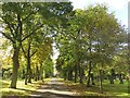 NZ3364 : Path in Jarrow Cemetery by Graham Robson