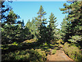 NJ0217 : Forest road through coniferous trees by Trevor Littlewood