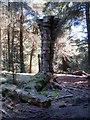 SD8241 : The Quaker Tree in Aitken Wood by Steve Daniels