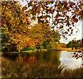 SK2679 : Autumn colour at Longshaw lake : Week 43