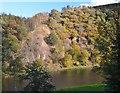 NT5934 : Steep bank above the Tweed by Jim Barton