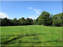 ST5707 : Grass field near Melbury Osmond by Jonathan Thacker