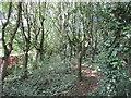 ST5707 : Footpath at Melbury Osmond by Jonathan Thacker