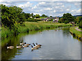 SJ8951 : Caldon Canal north of Milton, Stoke-on-Trent by Roger  Kidd