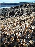 NX8354 : Cockles on the beach, Kippford by Richard Sutcliffe