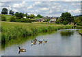 SJ8951 : Canal and farmland, Norton-in-the Moors, Stoke-on-Trent by Roger  Kidd