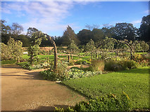 SE5158 : Beningbrough Hall Gardens by David Dixon