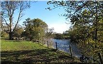 NZ2115 : The Tees below Piercebridge by Gordon Hatton